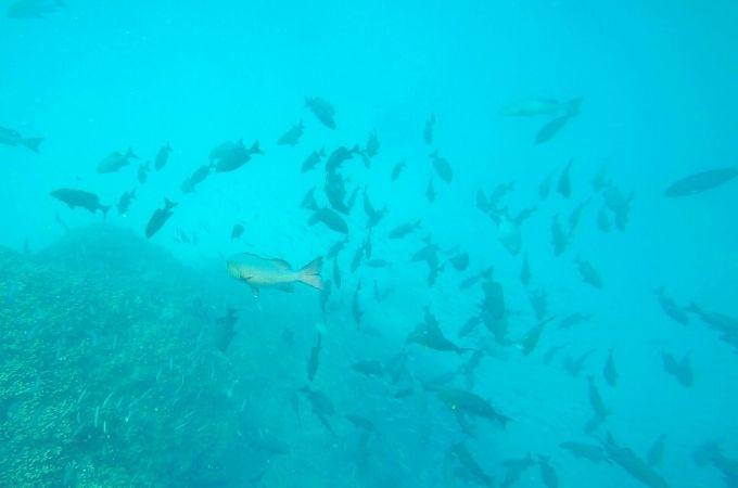 Barracuda Bommie Snorkeling