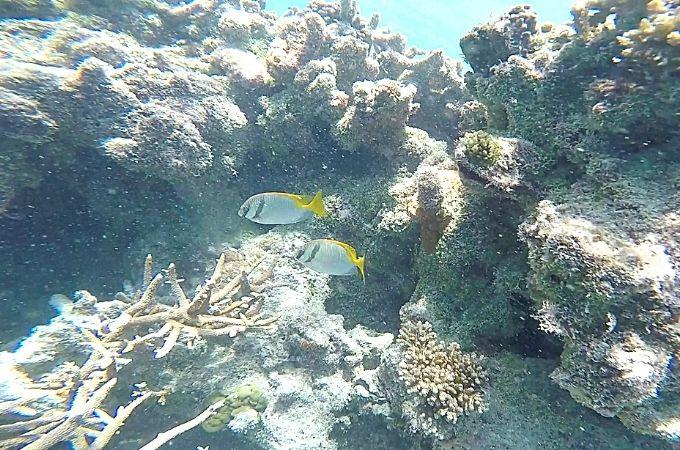 Reef World Snorkeling Fish